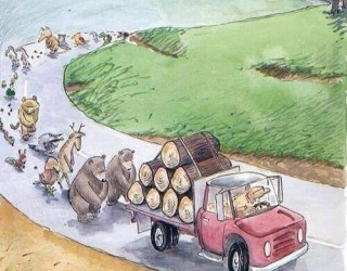 Important Videos - deforestation is not \'just\' about trees